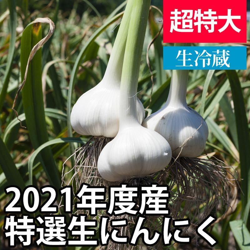 2021年産特選生にんにく(新にんにく) 【超特大サイズ】【予約商品・数量限定】